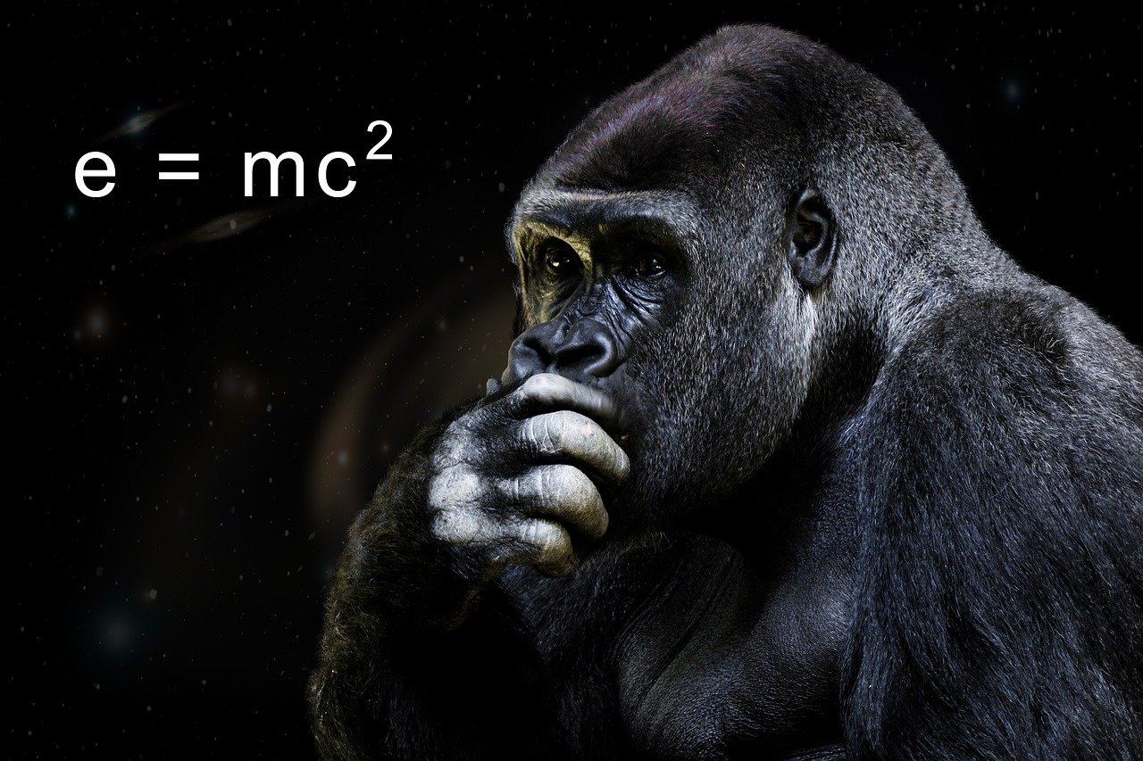 webprojekt chemnitz authority monkey